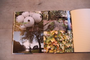 Fotofabriek paddestoel