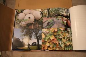 Hetfotoalbum paddestoel